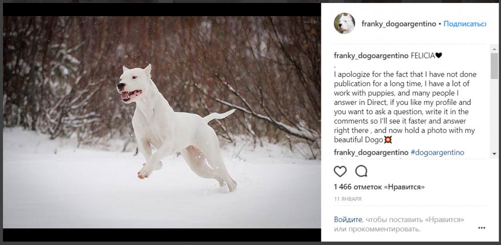 история развития аккаунта в Instagram: реклама